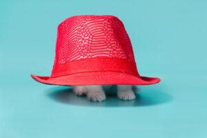 Katze unterm Hut versteckt